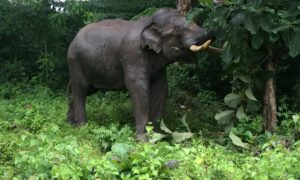 Elephants and a Birthday in Wayanad