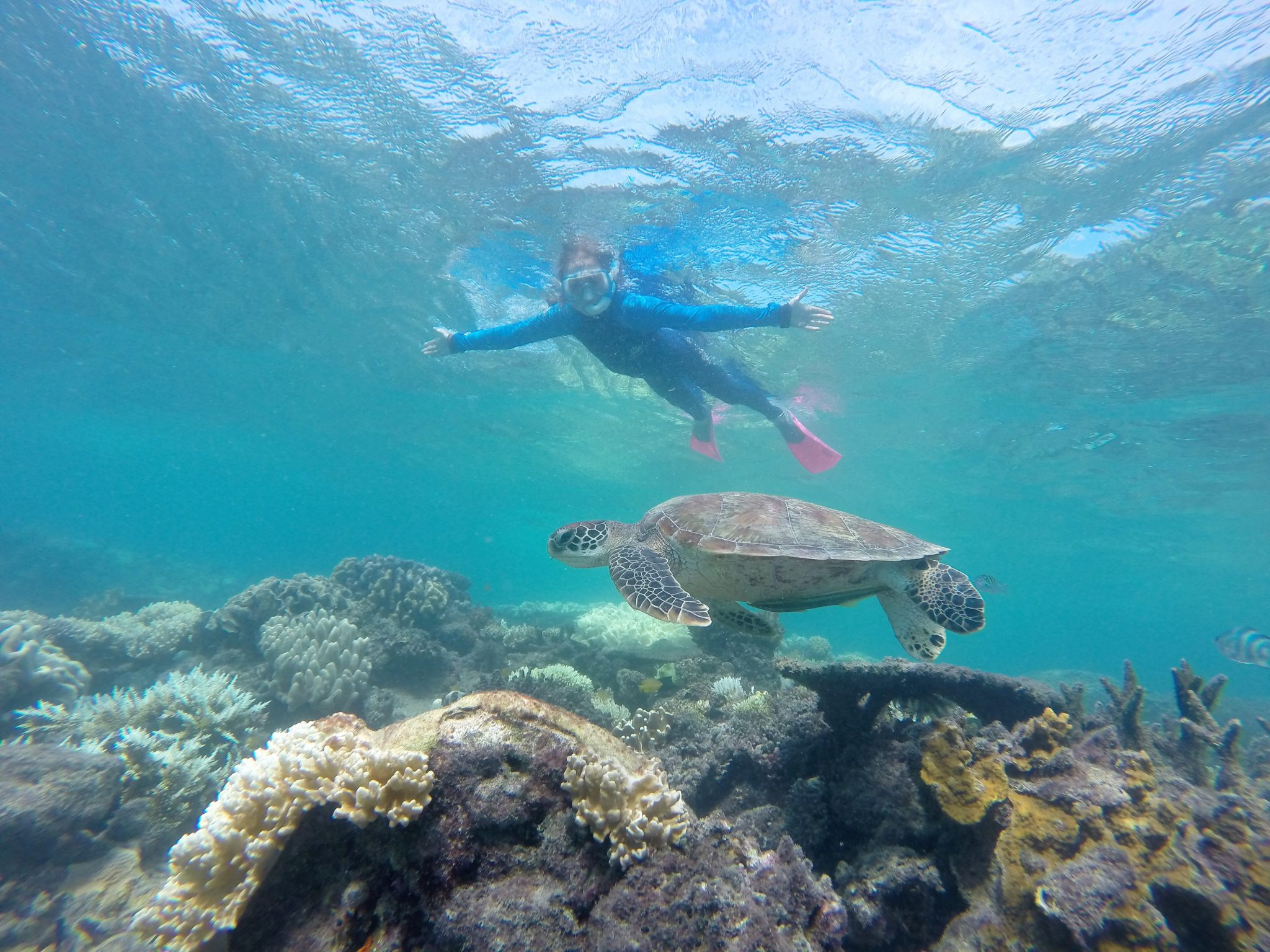 Image result for great barrier reef swimmer and turtle""