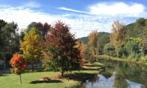 An Autumn Weekend Away in Bright with Kids