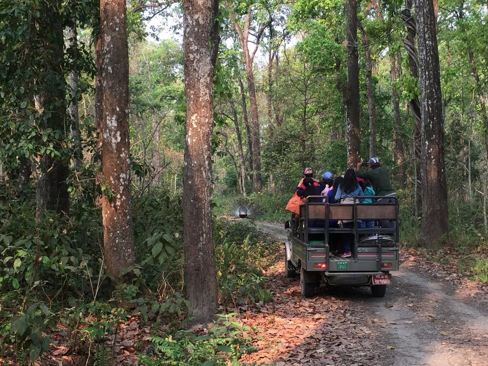 Should You Visit Chitwan National Park? - 5 Lost Together